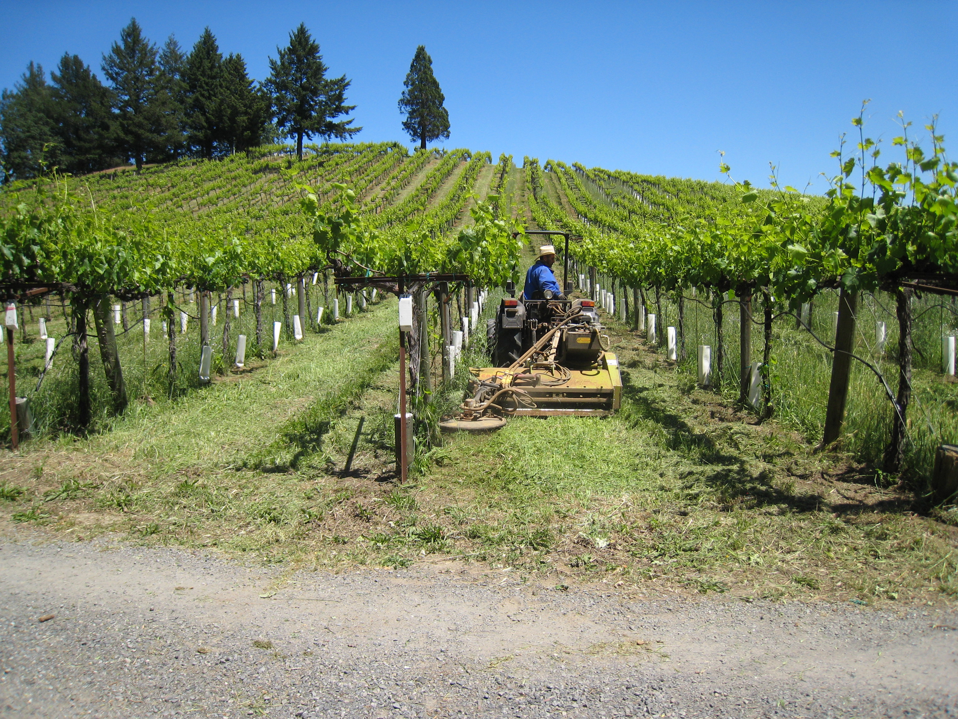 Mow Under Vineyard Trellis Butler Equipment Inc